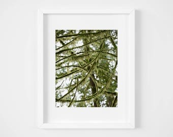 British Columbia tree print - Green nature photograph - Canada photo print - Large plant wall art - Fine art photography - Cabin decor - PNW
