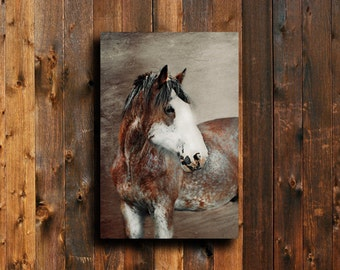 Red Clydesdale - Horse photography - Horse art - Horse decor - Horse art canvas - Horse decoration - Animal photography