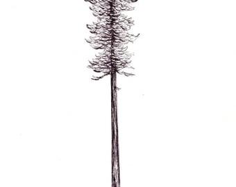"California Redwood Print:  Digital print of an original drawing available 5x7"" or 8x10"""