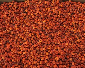 1 Pound Orange Putka Pods, unscented, Potpourri, mini pumpkins, bowl filler, dried botanical, fall decor, Halloween, Bulk Putka Pods