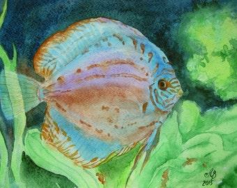 "The Discus fish Original Watercolor Painting Handmade 8""X12"" aquarium fish, painting, art"