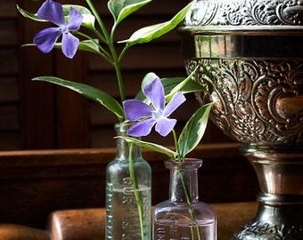 Flower Photograph, Botanical Art, Periwinkle Print, Floral Still Life, Silver Lamp, Glass Bottles, Home Decor, Lavender Petals - Periwinkles