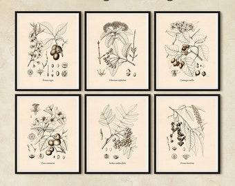 Wall art set, Printable vintage art, Set of 6 prints, Fruit trees, Rowan, Plum, Crab apple, Rum cherry, Viburnum, Hawthorn, JPG files