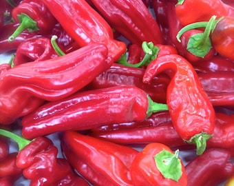 Jimmy Nardello Sweetest of All Red Peppers Rare Heirloom Seeds Grown To Organic Standards