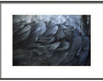 Crow Feathers, Feathers, Black and Blue Feathers, Fine Art Photography, Crow Feather, Surreal, Crow Art, Home Decor
