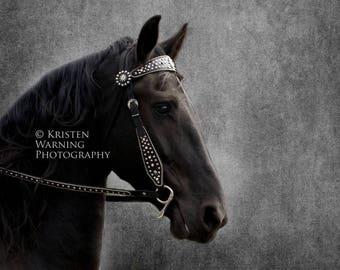 Equine Art, Horses, Horse Photos, The Noble, Fine Art Photography, Photography, Portraits