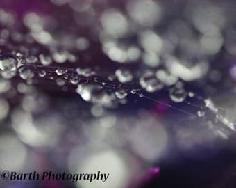 Art Photograph-- Abstract Photo-- Gifts for men women, for her, him, macro, color, rain, minimalist, nature, decor, wall art, prints, web