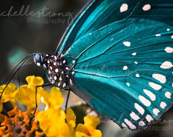 Nature Photography, Butterfly Photography, Large Wall Art, Macro Photography, Home Decor, Photography Gifts, Insect Prints, Butterflies