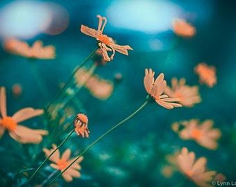 """Flower Photography - orange daisies against blue daisy pictures flower wall art orange wall decor spring large wall art 16x20  """"Friendship"""""""