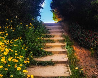 Stairway and daisies at Sunset Cliffs