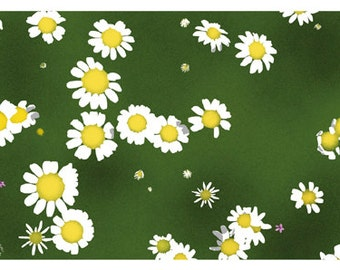 Flower Greeting Card, Blank, Chamomile Design No A6026
