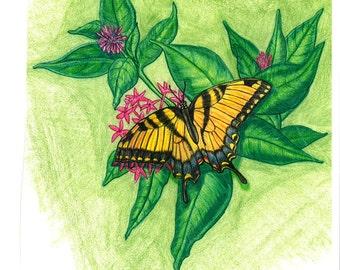 Swallowtail Butterfly Original  Drawing