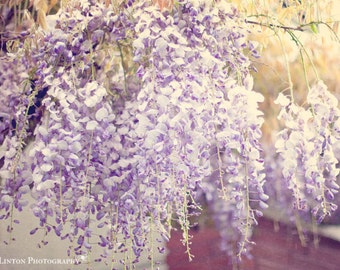 Flower Photography - Wisteria Photograph - Spring Flowers - Gift for Her - Flowers - Fine Art Photography Print - Purple White Home Decor