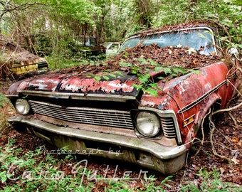 1970 Chevy Nova in the Woods Photograph