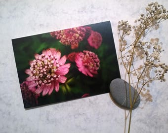 """Floral Photography Greeting Card """"Pink and Bold"""""""