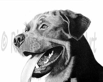 A4 Rottweiller from Original Charcoal Drawing Unmounted