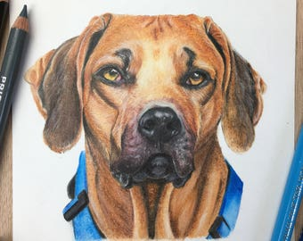 5x7 Custom Pet Portrait / Custom Dog Portrait / Colored Pencil