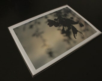 """Blank Photo Greeting Card, 7"""" x 5"""", 'Weepy Blossoms'"""