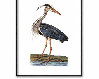 Blue Heron Print, Digital Download (Egret Bird Folk Art, Printable Antique Wall Decor) 18th Century Artist
