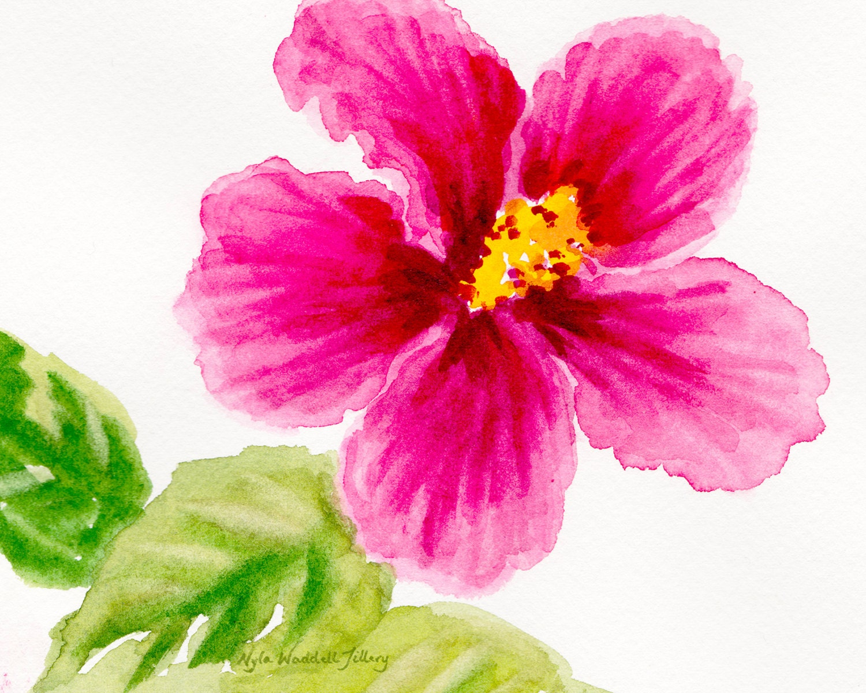 Flower art nature art pink hibiscus floral art cottage chic description pink hibiscus tropical flower izmirmasajfo