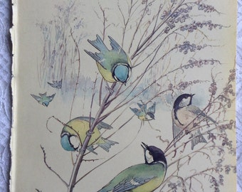 January - Vintage Botanical Book Page - Blue Tits - Country Diary of an Edwardian Lady - Edith Holden - Coleridge