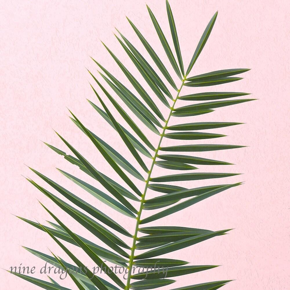 Pink palm tree print minimalist palm art palm tree art zoom amipublicfo Images