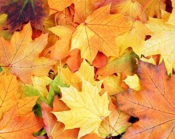 Laminated placemat autumn foliage