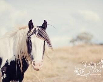 Gypsy Photo Print - Farmhouse Decor - Horse Decor - Equine Art - Horse Photography Print - Fine Art Wall Hanging - Rustic Decor