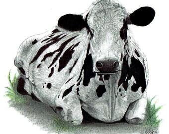 Graphite Illustration-Dairy Cow- Dairy Farm- (Pyengana Tasmania) 11x11cm