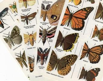 Papillon papillon & Illustrations de papillon, papillon Print-4 couleur vintage 1960 ' s ex-libris, illustration de la nature, biologie, imprimer, insectes