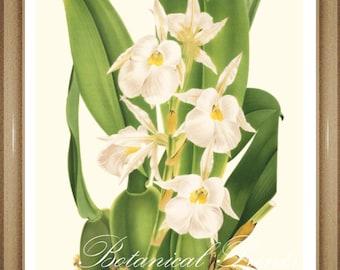 "Botanical Print. White Flower Print. Orchid Print #12. 5x7"". 8x10"" 11x14"""
