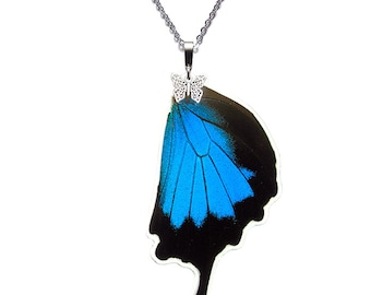 Real Butterfly Wing Pendant / Necklace (Papilio ulysses Hindwing - N022)