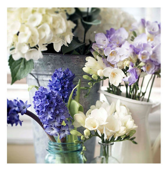 Art, Photography Print, Still life, Spring Flowers, French Country, Shabby Chic, Cottage Decor, Home, Blues, Ivory,  Gray, Lavender