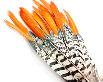 7-9 Inch Orange Tipped Feathers. Lady Amherst Pheasant Quills for Making Masks.