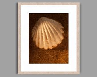 SEASHELL #14 - Framed Art Photography, Home Decor, Wall Art, Nature, beach, seashells, ocean