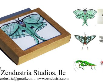 Cool Bugs Robotic Insect Card Boxed Set