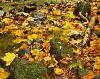 Autumn Rain Accord