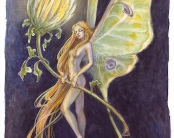 Lunar Moth Faerie by Renae Taylor