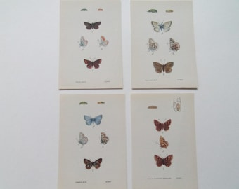 Butterflies set of 4 Vintage colour-plate dated 1954 10cm x 14cm each