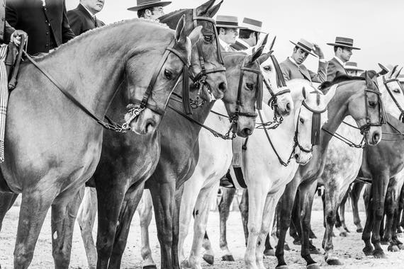 "Horse Prints, ""The Line Up"", Spanish Horses, Travel Prints,Equine Prints, Black and White Prints, Cowboy Prints, Equestrian Prints"