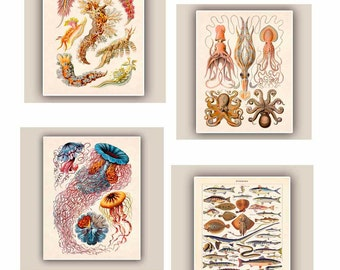 Jellyfish art, Octopus Squid decor, Sea life Prints, Fishes vintage 'Poissons' print,  cephalopods, nudibranchia Prints, Coastal decor