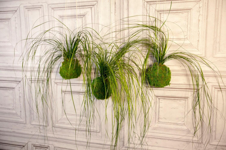 Set of 3 Care Free, Real Preserved Grass, Kokedama Hanging Moss Ball ...