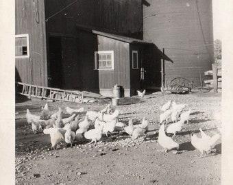 Original Vintage Photograph Snapshot Chickens in Barnyard Barn Silo 1930s-40s