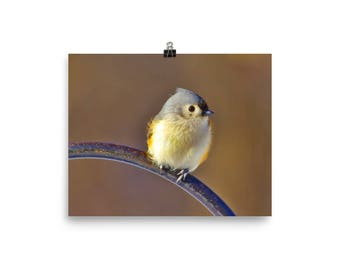 Tufted Titmouse, Titmouse, Bird wall art, Wildlife wall art, Bird