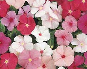 Vinca Periwinkle Mix Flower Seeds/Annual   40+