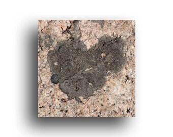 "Mini Valentine Art Print, 4.5"" square wrapped canvas, Lichen on Bolder Heart, Nature Love"