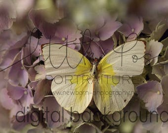 "Little Pose ~ Butterfly Hydrangea ""The One"" Newborn Digital Background High Res jpg file"