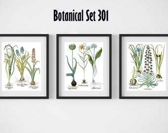 Botanical Print Set of 3, Vintage Botanical Illustrations, Floral Print Set, Botanical Posters, Botanical Artwork, Framed Botanical Art