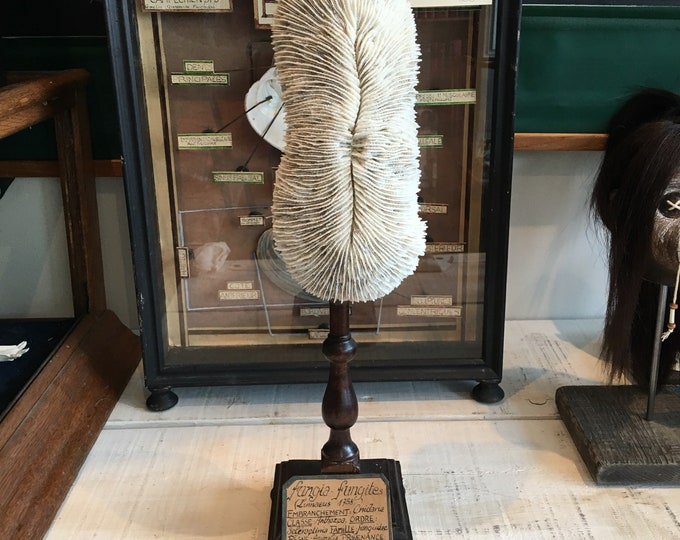 A coral antique museum style mounting