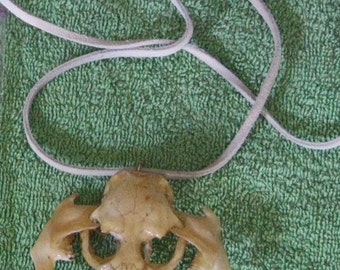 SKULL NECKLACE Natural Arts Native American Style Muskrat Skull Jaw Bone Necklace